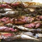 Zuppa di triglie e naselli nostrani al finocchio selvatico